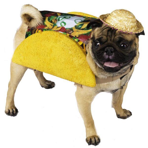 Pug in a  Taco Costume