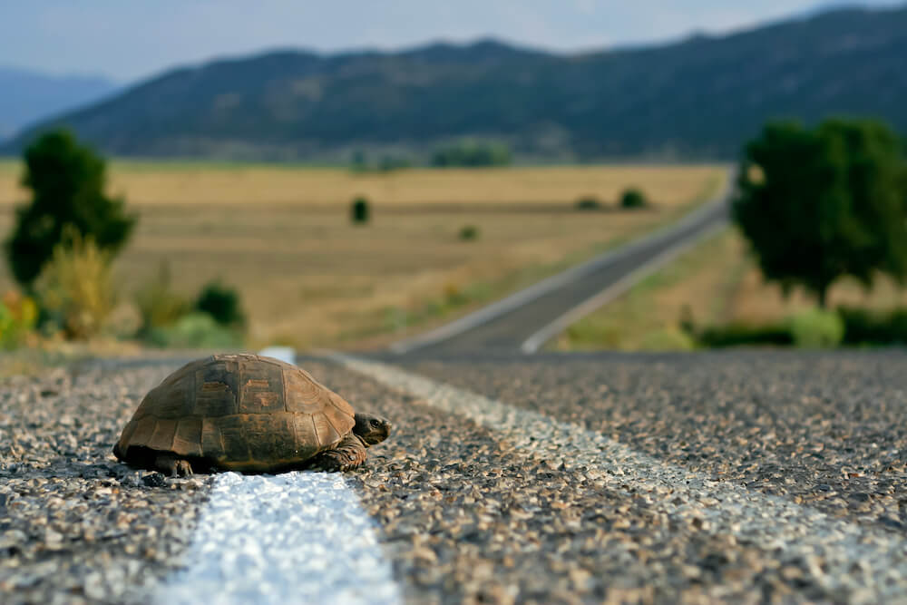 Self-awareness turtle on the road