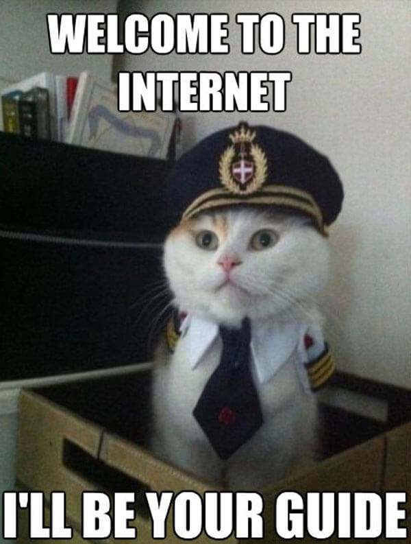 Cat meme - welcome to the internet, I'll be your guide